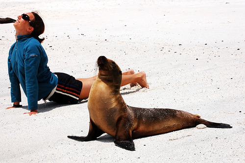 animales-haciendo-yoga-humor-4
